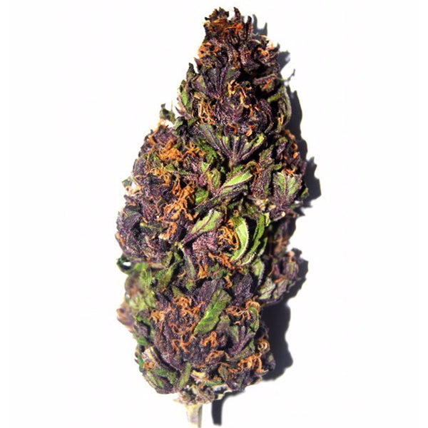 purple haze weed