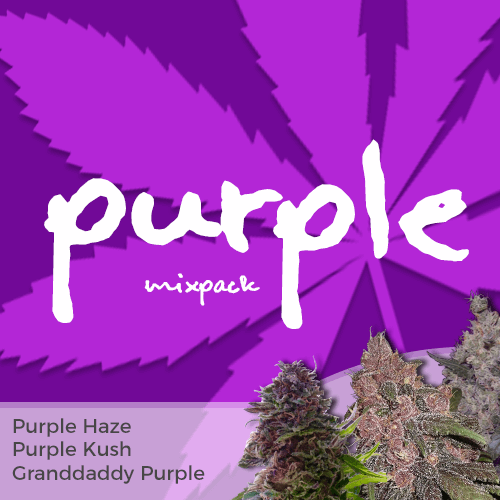 purple strains