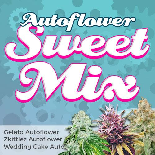 sweet autoflower seeds