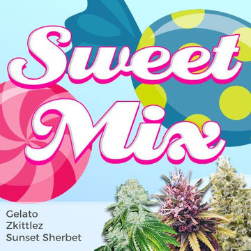 sweet marijuana strains