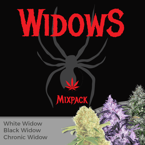chronic, black and white widow marijuana seed mixpack