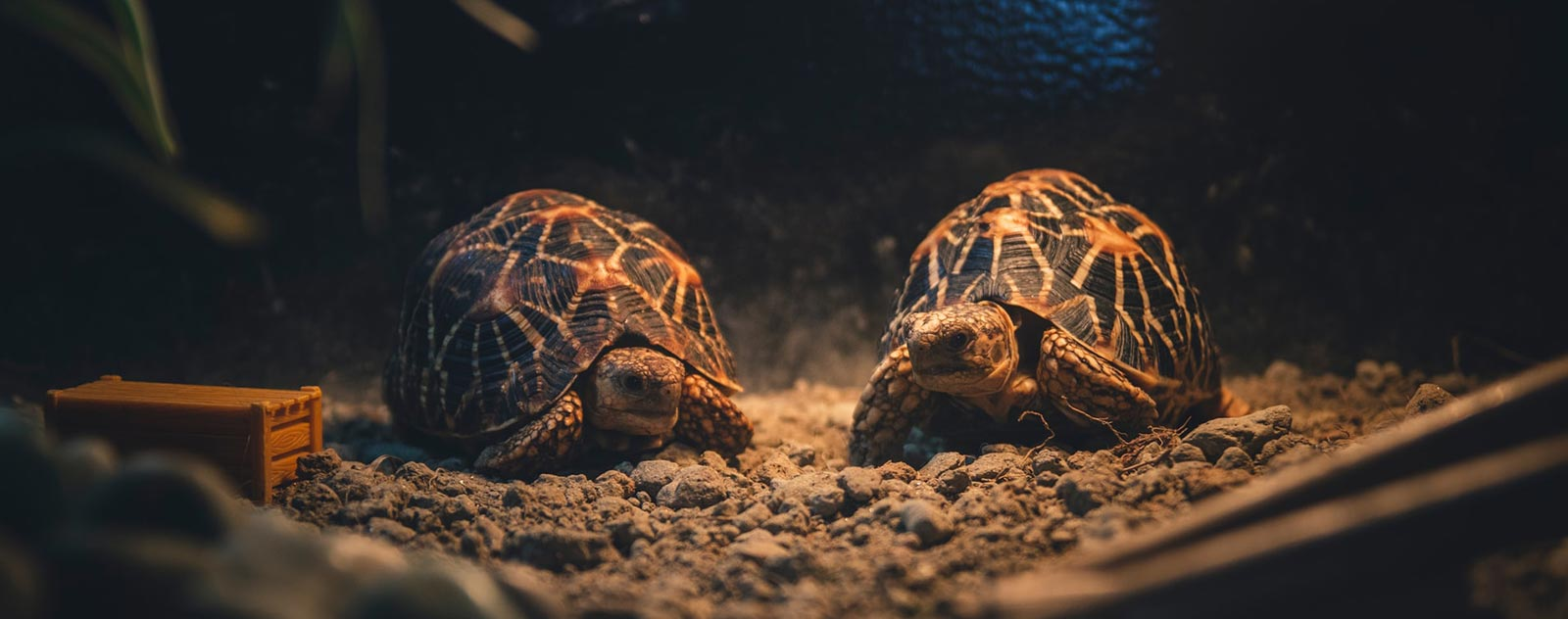 tortue-signification