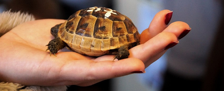 Relation-homme-tortue