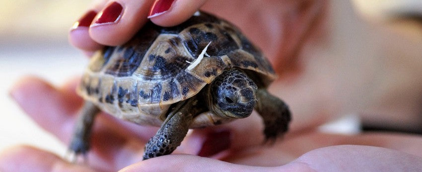 age-tortue