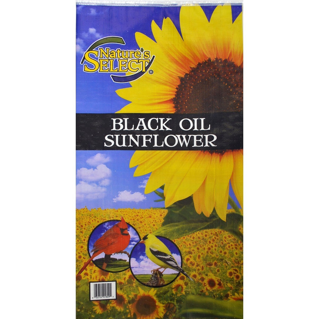Black Oil Sunflower Bird Feed