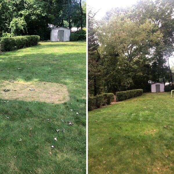 Lawnbright natural lawn care before and after