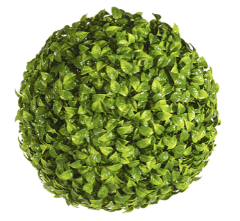 Pittosporum Topiary Ball: 38cm
