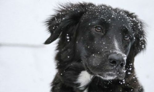 Cold Weather Safety for Pets