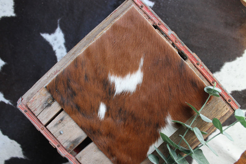 Tri-color brindle cowhide grad cap topper