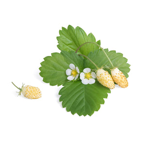 White Wild Strawberry Lingot®