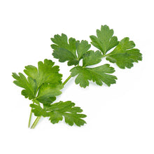Load image into Gallery viewer, Flat Parsley Lingot®