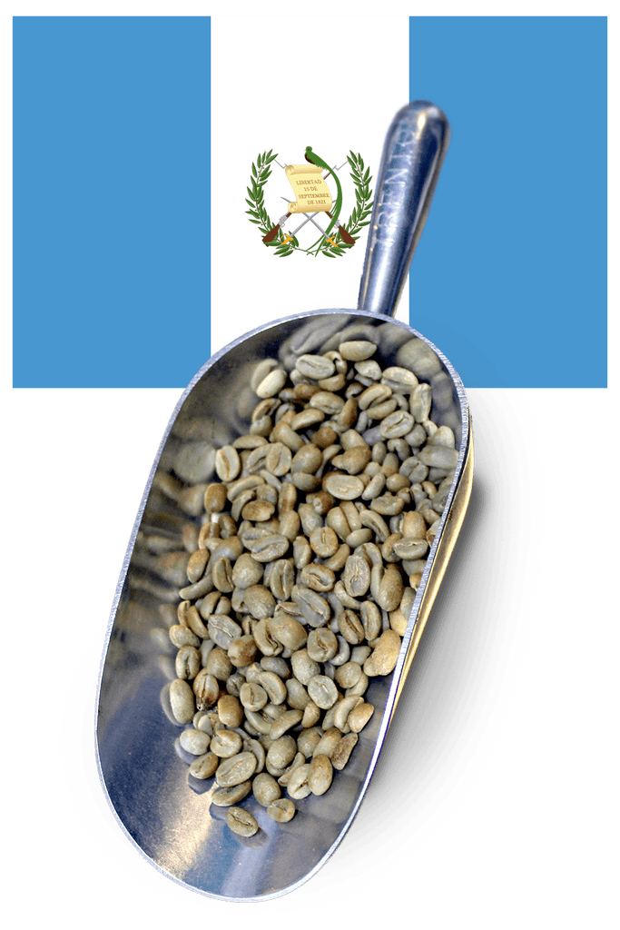 buy green beans guatemala