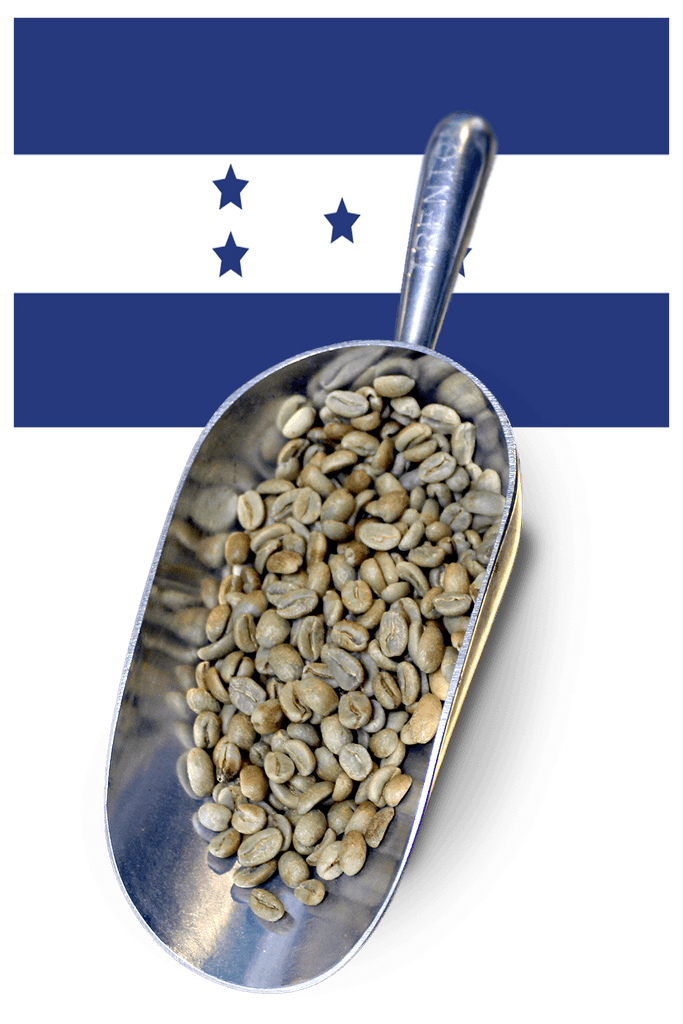 buy green beans honduras