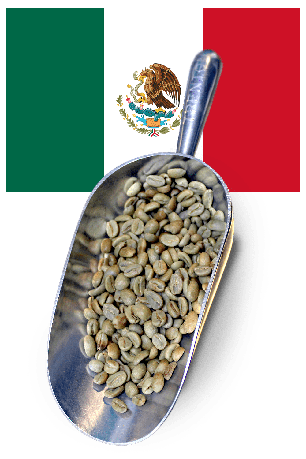 buy mexican green beans