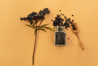 Top elderberry benefits