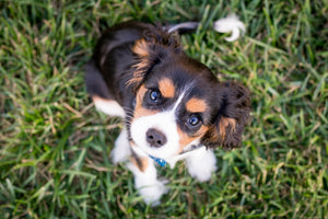 Ultimate Guide On Dog Clicker Training