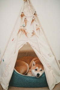Easy DIY Projects For Dogs