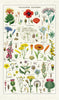 Cavallini Tea Towel - Wildflowers