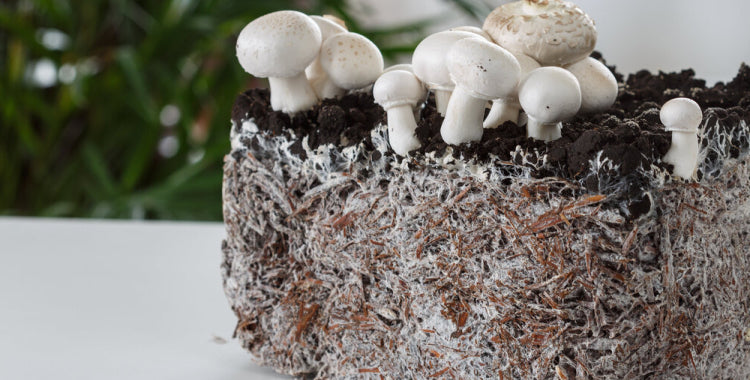 What is Mycelium?