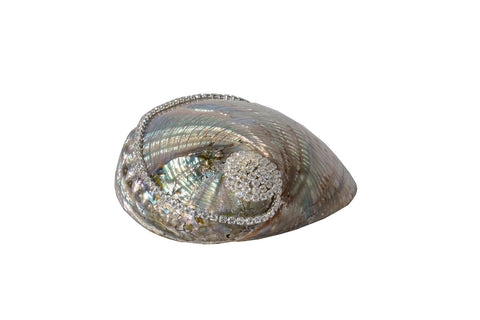 Polished Green Mexican Abalone