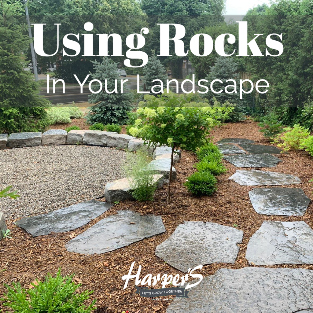 USING ROCKS IN YOUR LANDSCAPE