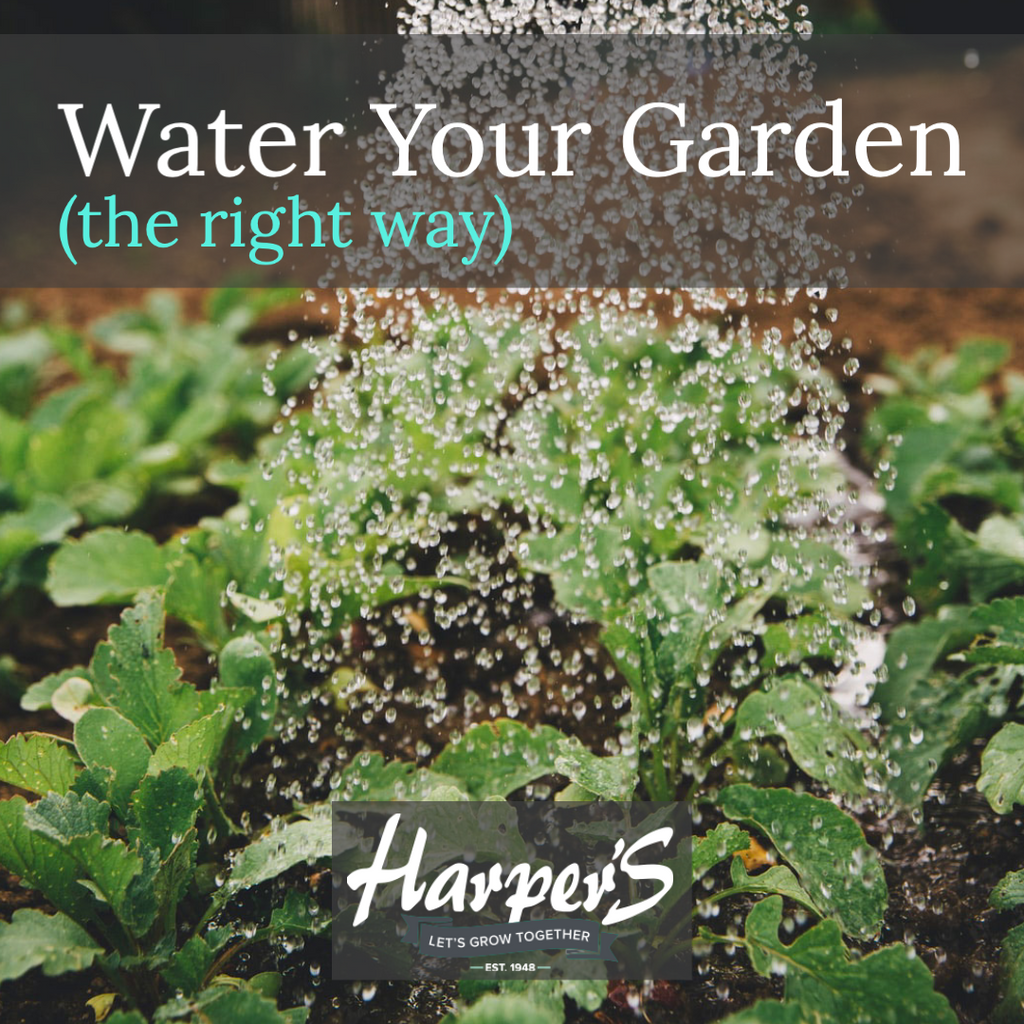WATER YOUR GARDEN (THE RIGHT WAY)