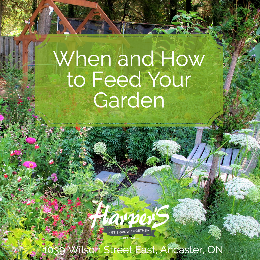 WHEN AND HOW TO FEED YOUR GARDEN