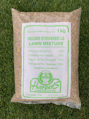 Deluxe Overseed Lawn Mixture 1kg