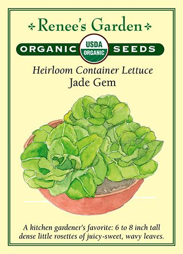Organic Heirloom Container Lettuce- Jade Gem