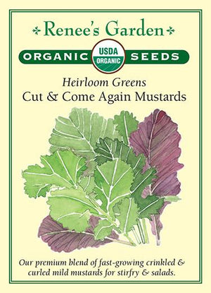 Organic Heirloom Greens - cute & come again Mustard