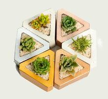 Load image into Gallery viewer, Triangle Concrete Pot with Succulent