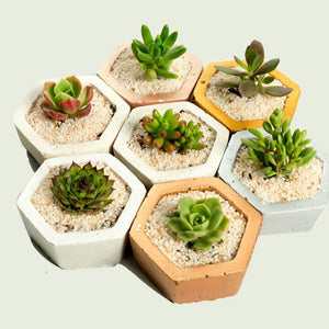 Hexagon Concrete Pot with Succulent