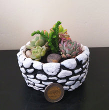 Load image into Gallery viewer, Succulent Garden in Stone Concrete Bowl