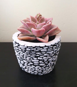 Succulent in stone concrete planter
