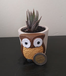 Owl Concrete Pot with Succulent
