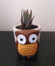 Load image into Gallery viewer, Owl Concrete Pot with Succulent