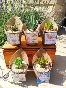 Succulents wrapped in Hessian