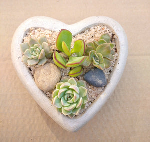 Heart Concrete Pot with succulents (Medium)
