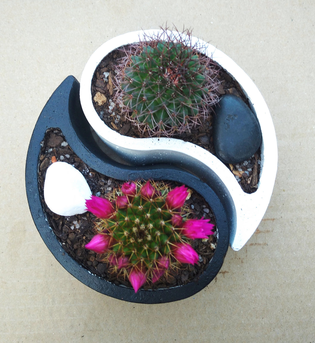 Yin Yang Pots with Cactus (Set of 2)