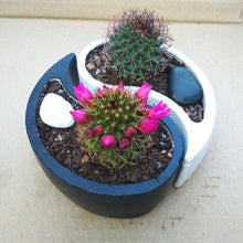 Load image into Gallery viewer, Yin Yang Pots with Cactus (Set of 2)