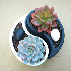 Yin Yang Pots with Succulents (Set of 2)