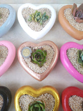 Load image into Gallery viewer, Heart-shaped concrete pot favour with succulent