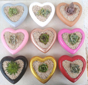 Heart-shaped concrete pot favour with succulent