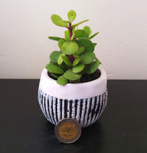 Load image into Gallery viewer, Stripe Pattern Concrete Pot with Spekboom