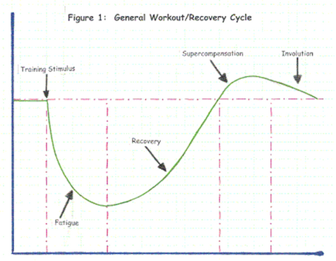 Figure 2- The overtraining theory: A general workout/recovery cycle
