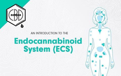 The ECS is a signaling network that controls processes in the body using endocannabinoids. Endocannabinoids (endo meaning within) are specialized compounds which, as needed, are synthesized or produced in the body. The body produces endocannabinoids to reclaim its balance when outside of homeostasis. Endocannabinoids then send the cells information that gives a specific direction to the cells that will lead to a return to homeostasis. Let's take a further look at how it works in this process.