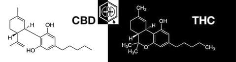 An Introduction to the Endocannabinoid System (What is it?)