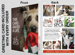 Give the Gift of a Peaceful Foster Home