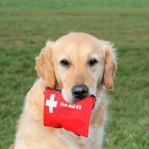 8 Items You Should Have in Your First-Aid Kit