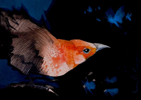 orange headed bird peers into dark background das blue moths flutter around. original paining by Canadian Artist Linda Kemp
